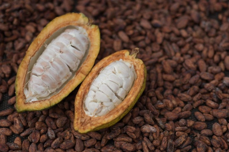 2de3f0ebea573 Belize Chocolate Festival – May 24th – May 25th · CC+L Travels